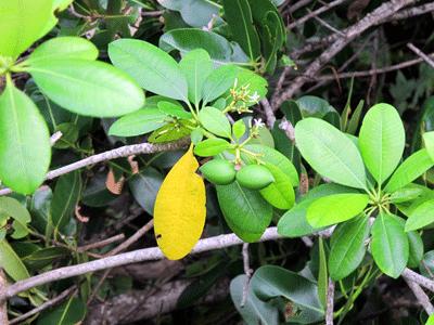 2plant