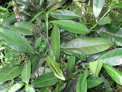 3plant
