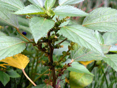 4plant