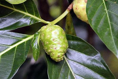 5plant