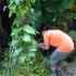 Applying herbicide